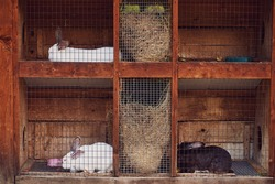 A system of cages and feeders for rabbits. Rabbit breeding farm. Close-up