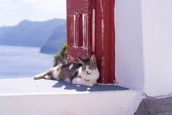 A tabby cat relaxing on white wall in Oia. Stray cats in Santorini, Greece