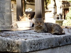 A tabby cat sits on a stone tomb in the Montmartre Cemetery