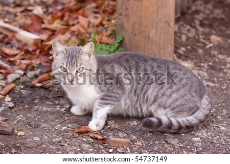 A tabby cat sitting on gravel