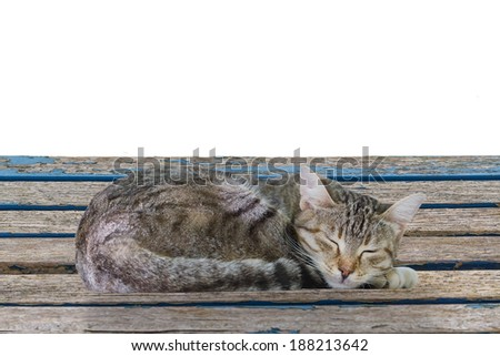 A Tabby Cat Sleeping on a Weathered Garden Table Isolated on a White Background.Copy Space