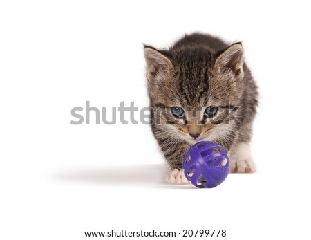 A tabby kitten playing with a purple ball.