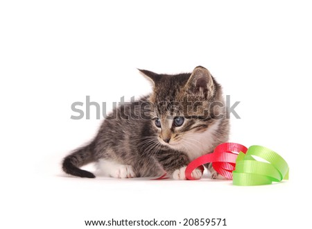 A tabby kitten playing with ribbons.