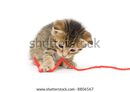 A tabby kitten plays with a string of yarn on white background