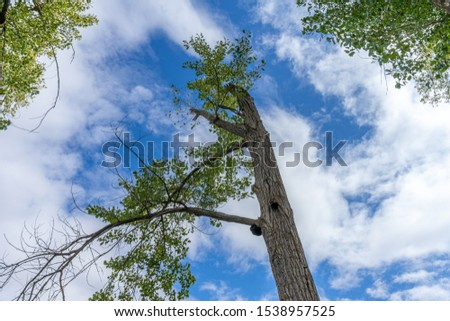 a tall tall thin tree that seems to reach the sky #1538957525