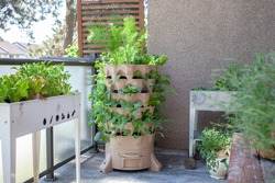 A tall vertical garden sits on an apartment balcony (patio) with fresh salad greens, herbs and vegetables. Ideal small space and urban gardening solution