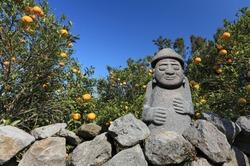 A tangerine orchard and stone grandpa (Dolhareubang) of jeju island, Korea