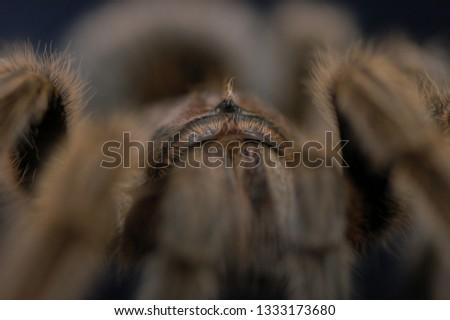 A tarantulas legs #1333173680