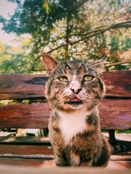 a tattered cat is sitting at the table