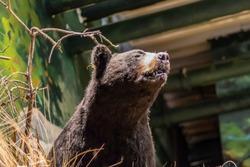 A Taxidermy Bear Close Up