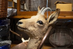 A taxidermy deer, antelope, or gazelle for sale in an antiques s