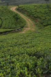 a tea estate road in sri lanka