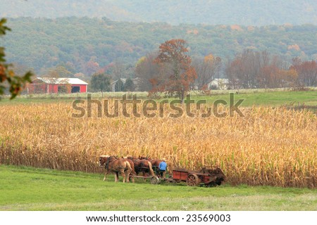 a team of Amish work horses pulling a wagon through a field