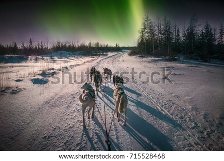 A team of six husky sled dogs running on a snowy wilderness road in the Canadian north under the aurora borealis and moonlight.