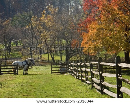 A team of two horses in a field of  the historic Longstreet Farm in Holmdel New Jersey.