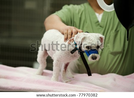a technician gets a dog ready for an examination