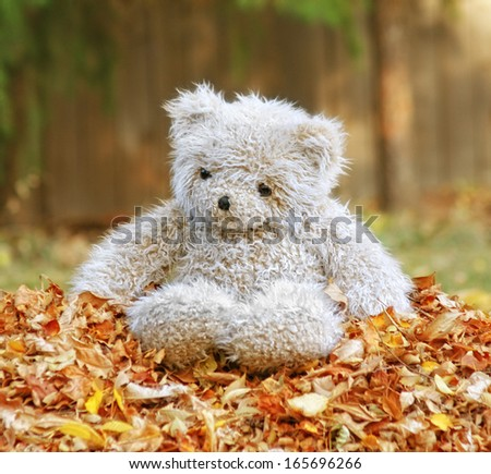 a teddy bear in a pile of leaves
