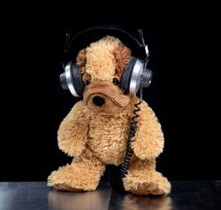 A teddy dog wearing headphones and standing around
