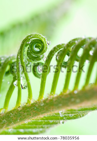 a tendril,  macro of plant