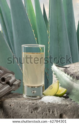 A Tequila shot with limes and salt with a Blue Agave plant background