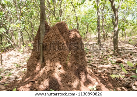 A termite hill formed against a tree trunk #1130890826
