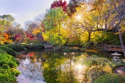 A Texas burst of fall color with pond reflections