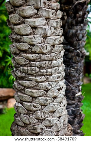 A texture of a palm tree.