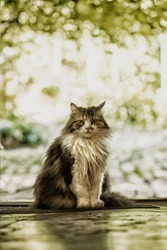 A three-colored cat with yellow eyes sits at the entrance to the house. The hunter.Three colored cat. Cat with yellow eyes, Cute cat.