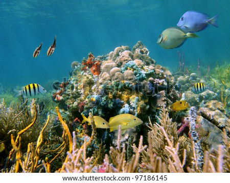 A thriving reef underwater and its inhabitants, corals, tropical fish, squid and colorful sponges