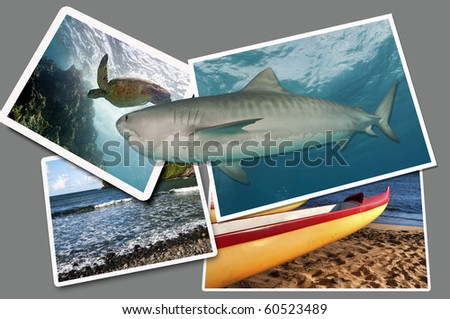 A tiger shark appears to leave a photo to hunt a sea turtle n the next photo - stock photo