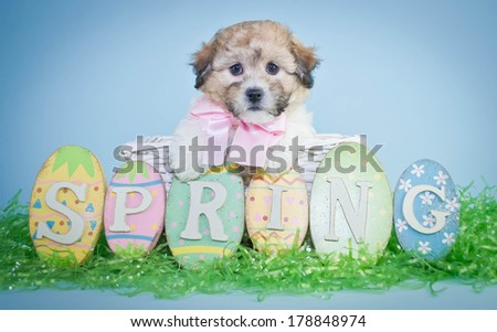 A tiny Puppy sitting in an Easter basket with a spring sign wearing a cute pink bow.