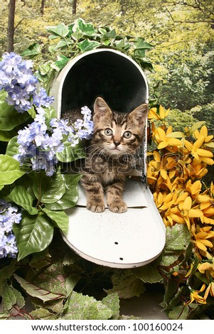 A tiny tiger kitten sits in the opening of a flower garden mailbox