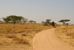 a tipical arican landscape in tanzania