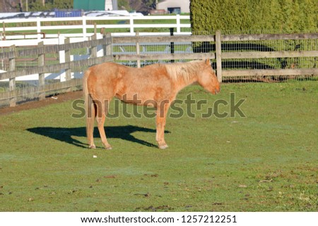 A tired brown mare dozes off while standing in the pasture's sunlight.
