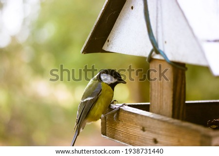 A tit eats food from a bird feeder. wooden bird house. Yellow little bird in the park on a sunny day. Protection of nature and the environment concept. Hungry titmouse bird, latin name Parus major.
