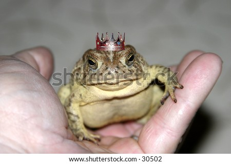 a toad sits in my hand one evening showing off its crown and proving its really a handsmome prince waiting for a damsel to kiss him and save him from the evil curse once placed upon him by a wicked witch