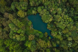 A top down view of an English countryside woodland area