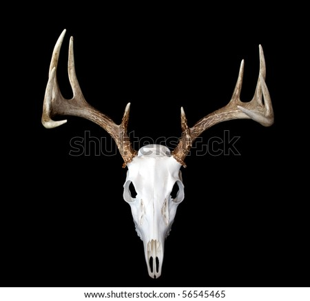 A top view of a european deer mount