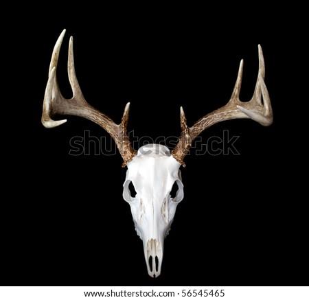 A top view of a european deer mount