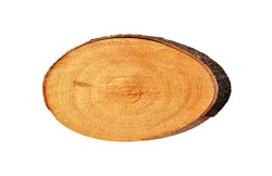 A top view of a piece of  tree trunk  in the shape of an oval isolated on white as banner or background