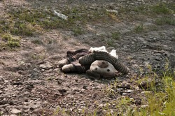 A torn old toy lies on the ground, forgotten, tragedy