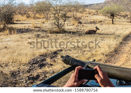 A tourist takes a photo on their smartphone of a deer taking rest under shade in Ranthambore Rajasthan