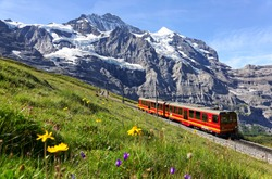 A tourist train travels on Jungfrau Railway from Jungfraujoch (Top of Europe) to Kleine Scheidegg & wild flowers bloom on a green grassy hillside under blue sunny sky in Bernese Oberland, Switzerland
