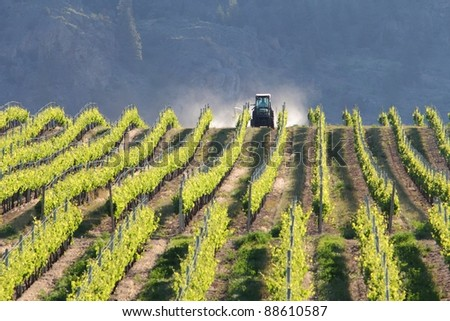 A tractor spraying rows of grape vines in a vineyard in the Okanagan. Early morning. British Columbia, Canada.