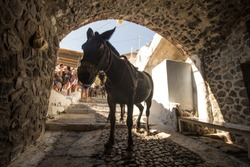 A traditional mule resting in the shade on the island of Santorini.