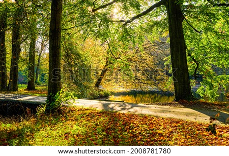 A trail in an autumn forest park under the rays of the sun. Autumn forest park trail Autumn scene