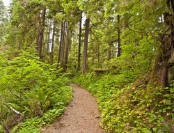 A trail in Rain Forest at Olympic National Park
