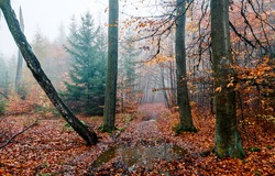 A trail in the autumn forest after the rain. Misty forest after rain in autumn. Misty autumn forest trail view. Trail in misty forest