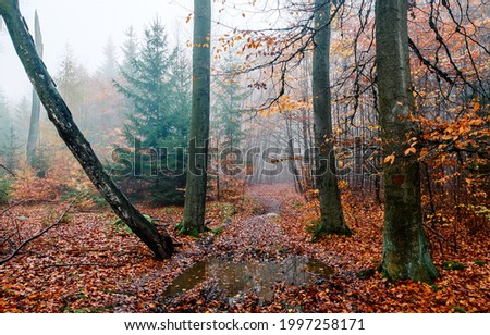 A trail in the autumn forest after the rain. Misty forest after rain in autumn. Misty autumn forest trail view. Trail in misty forest Foto d'archivio ©