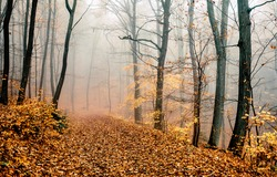 A trail in the autumn misty forest. Autimn misty forest trail. Misty forest trail in autumn. Autumn misty forest scene